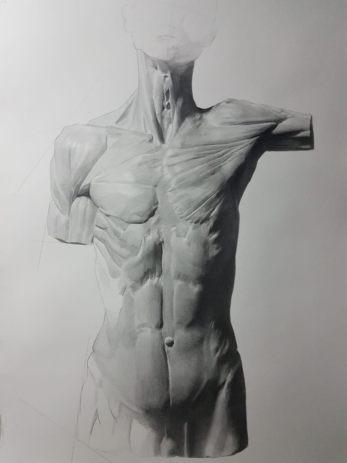 """ Torso "" (Private collection)"